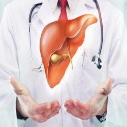 УЗИ органов гепатобилиарной системы